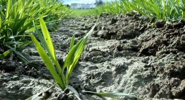 Planting & Growth