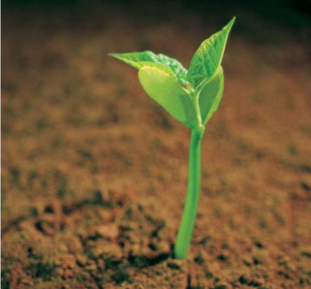 Why Church Planting?